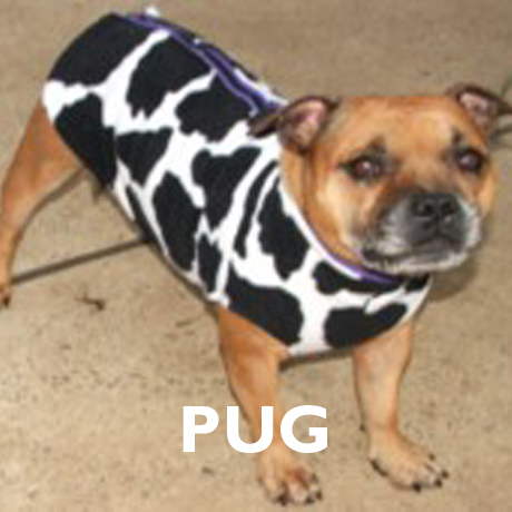 Pug Already Made Polar Fleece Vest Coats